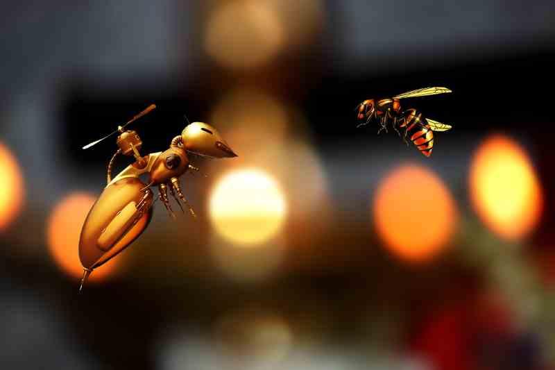 Comment surveiller sa ruche ?