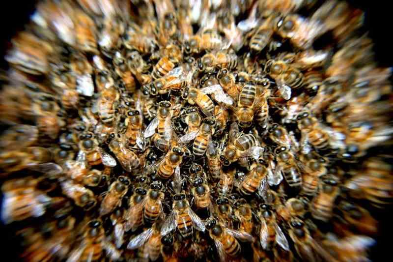 Ma ruche dans mon jardin