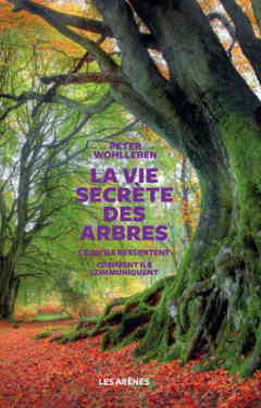 La vie secrète des arbres.