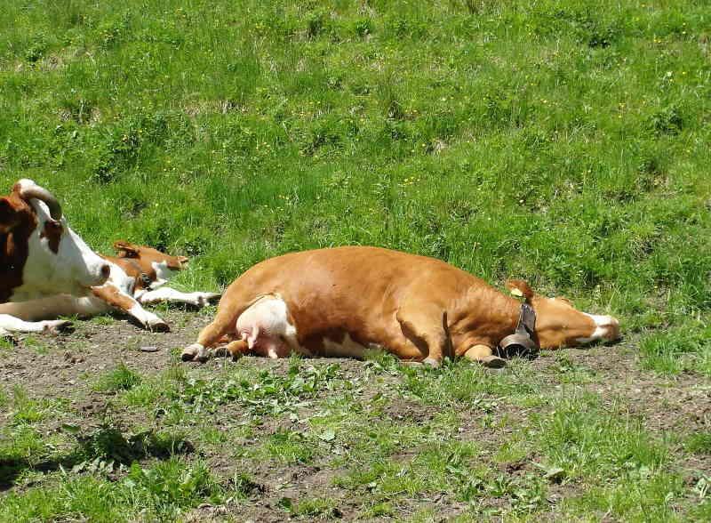 La chaleur tue les espèces